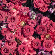 Texture of red roses — Stock Photo #6351198