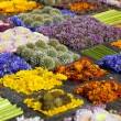 Stock Photo: Texture of many different flowers in blocks