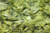 Texture made from green plants — Stock Photo