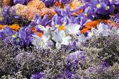 Renkli bitkiler ve çiçekler çok güzel — Stok fotoğraf