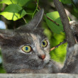 Stock Photo: Cat playing with tree branch