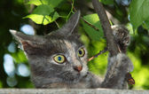 Cat playing with a tree branch — Stock Photo