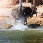 African elephants — Stock Photo #6670475