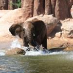African elephants — Stock Photo #6670485