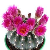 Cactus plant — Stockfoto
