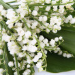 Lily of valley — Stock Photo #5765015