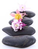 Spa stones and flowers — Stock Photo