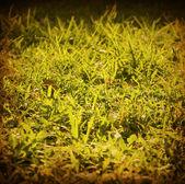 Champ vert — Photo