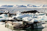 Jokulsarlon lagoon - Iceland. — Stock Photo