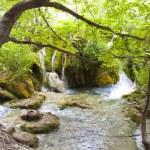 Small river, Plitvicka Lake - Croatia — Stock Photo #6302654