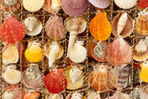Beauty colorful shells. — Stock Photo