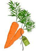 Big and health orange carrot - Vector — Stock Vector