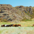 Stock Photo: Herd of horses among mountains