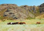 Herd of horses among mountains — ストック写真