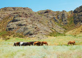 табун лошадей среди гор — Стоковое фото