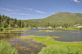 Big Bear marsh — Stock Photo