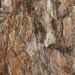Photo: Background spruce bark