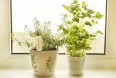 Rosemary and lemon balm — Stock Photo