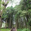 Stock Photo: Forest of Alishmauntiin taiwan