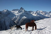 Caucasian mountains Dombay. russian mountain — Stock Photo
