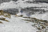 Ular, Caucasian grouse — Stock Photo