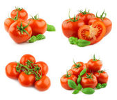 Tomatoes isolated — Stockfoto
