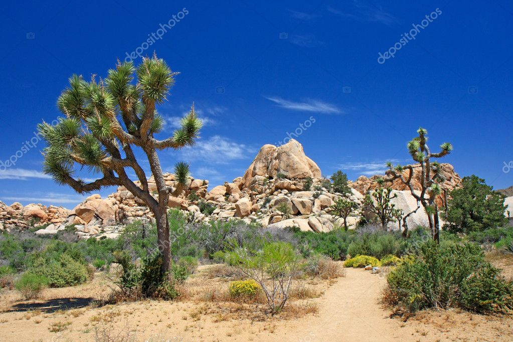 Landscape with joshua tree (Joshua Tree NP)  Stock Photo #5799945