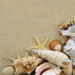 Collection of seashells — Stock Photo #5832295
