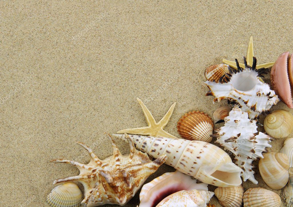 Collection of seashells on sand background — Stock Photo #5832295