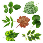 Colorful leaves collection — Stock Photo