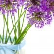 Bouqet of Allium / isolated on white — Stock Photo #5660760