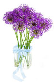 Bouqet of Allium / isolated on white — Stock Photo