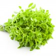 Fresh Basil / spice herb on white background — Stock Photo