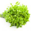 Fresh Basil / spice herb on white background — Stock Photo #6283093