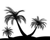 黑白色棕榈树假日环境 — 图库照片