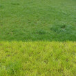 Stock Photo: Field of discolored grass in 2 shades of green