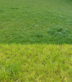 Field of discolored grass in 2 shades of green — Stock Photo