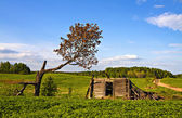 Abandoned home in countryside. Latvia. — Stock Photo