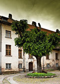Old castle yard with tree. — Stock Photo