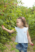 A smiling girl holding the palms of raspberries — Stock Photo