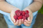 Raspberries in the children's hands — Stock Photo