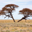 Etosha Park — Stock Photo