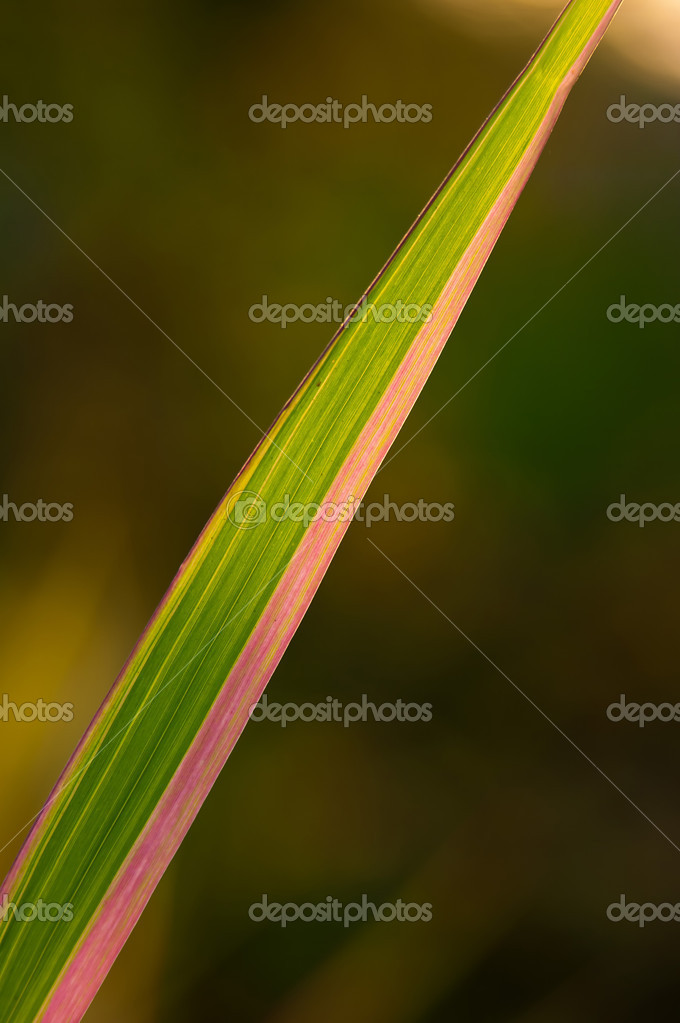 Narrow long leaf close-up outdoors enlightened with sun — Stock Photo #5599002