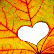 Autumn leaf with a hole in shape of heart — Stock Photo