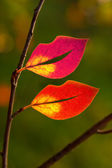 Leaves in the shape of lips — Stock Photo
