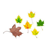 Life cycle of leaf — Stock Photo