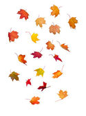 Falling Leaves — Stock Photo