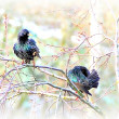 Spring starlings - Stockfoto