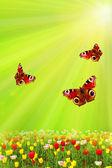 春チューリップと太陽と緑の蝶 — ストック写真