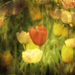 Vintage paper textures old photo postcard. Spring tulips. — Stock Photo #5813045
